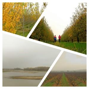 los sotos del Ebro