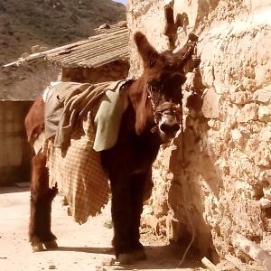 burro de valdegutur (la rioja)